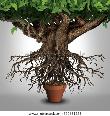 Business expansion and too big to manage business that does not fit metaphor or expanding outgrowing your home concept as a large tree  with a small plant pot as an icon for managing growth success - stock photo