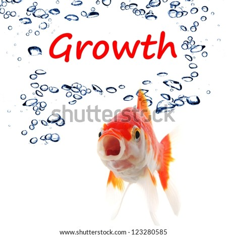 business growth or success concept with goldfish