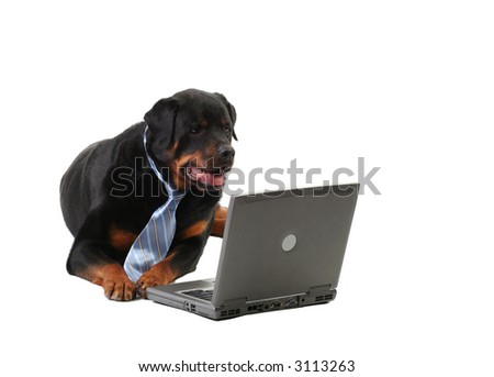 business-guard dog laying down, internet security concept, isolated on white