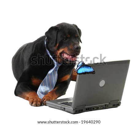 business-guard dog laying down, internet security concept, isolated on white, with butterfly