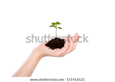 Business hand holding green small plant - stock photo