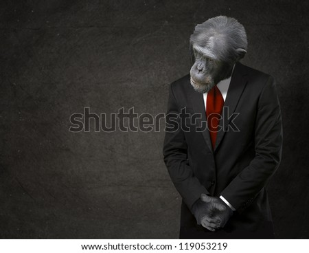 Business Monkey In Formal Attire On Black Background - stock photo