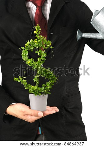 Businessman and  tree with US dollar isolated - stock photo