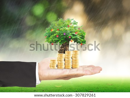 Businessman hand holding golden coins and fruitful tree or big plant with rainy over blurred beautiful green circle bokeh light background. Investment, Money Coin, Insurance Agent, ROI, LIT concept. - stock photo