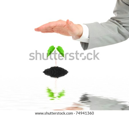 Businessman hand protecting  plant - stock photo
