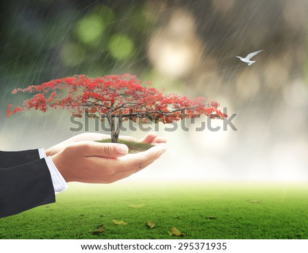 Businessman hands holding red flower tree with rainy over beautiful circle bokeh light  on beautiful autumn sunset background. Ecology Environment Day Investment, Insurance Agent CSR Trust concept. - stock photo