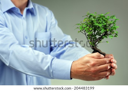 Businessman holding small bonsai tree concept for taking care of new development or the environment - stock photo