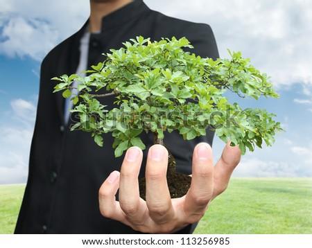 Businessman holding tree - stock photo