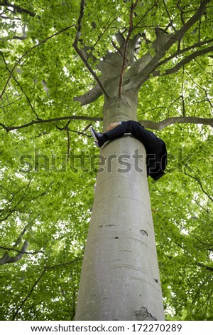 Businessman in a suit clinging to the trunk of a tall tree with his arms and legs viewed from directly below as he dangles just below the leafy green canopy and spreading branches, conceptual image - stock photo