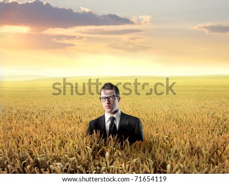 Businessman in the middle of a wheat field - stock photo