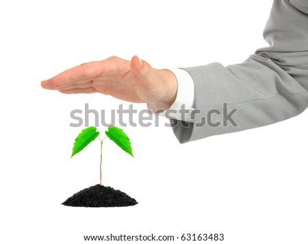 Businessman protecting green plant isolated - stock photo