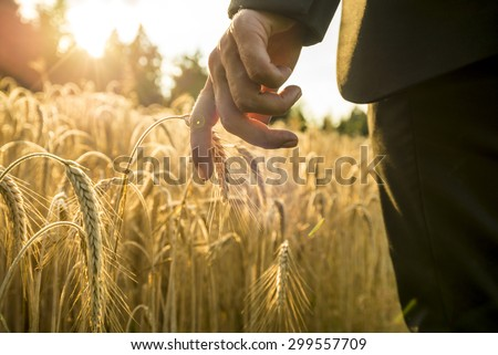 Businessman walking through a golden wheat field touching an ear of ripening wheat at sunset backlit by the golden sun. Conceptual of turning back to nature for inspiration, energy and peace of mind. - stock photo