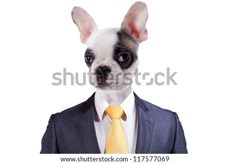 Businessman with a Boston Terrier dog face - stock photo