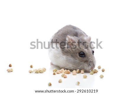 Busy as a hamster - stock photo
