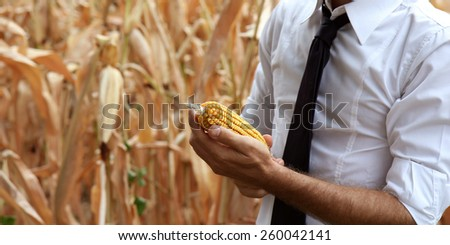 Busy farmer in his own cornfield. - stock photo