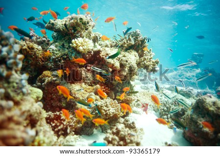 Busy life in lagoon with swimming fishes and corals - stock photo