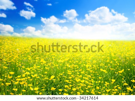 buttercup flowers and summer day - stock photo