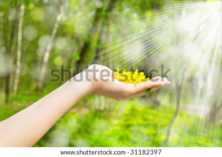 Buttercup in a hand against wood - stock photo