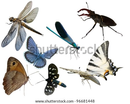 Butterflies a dragonfly the bug insects it is isolated on a white background - stock photo