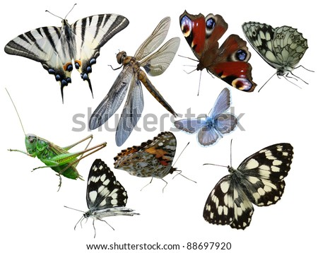 Butterflies a grasshopper a dragonfly insects it is isolated on a white background - stock photo