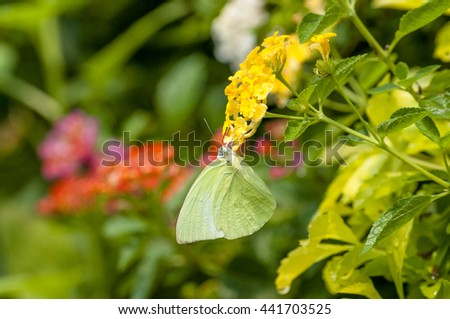 Butterflies and Flowers - stock photo