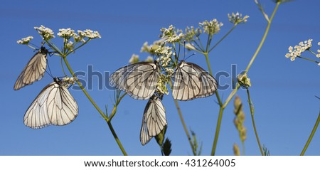 Butterflies and flowers. Summer. sky. white. - stock photo