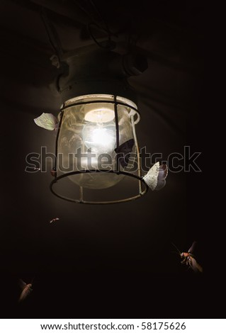 Butterflies and old lamp - stock photo
