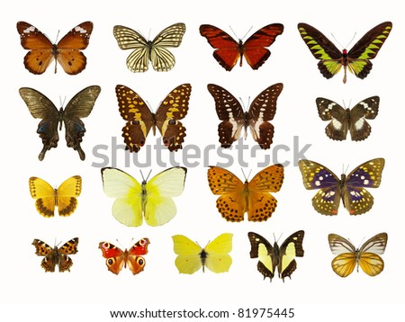 Butterflies collection - stock photo