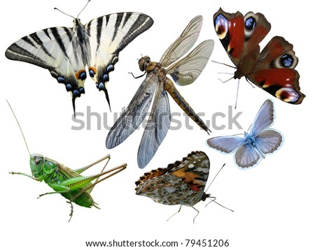 Butterflies, dragonfly, a grasshopper, other  insects isolated a white background - stock photo