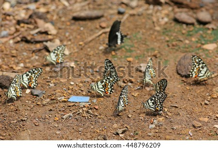 Butterflies eats the minerals in the soil.