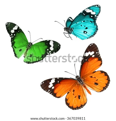 Butterflies flight. Isolated on a white background - stock photo
