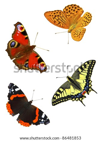 Butterflies, isolated, montage - stock photo