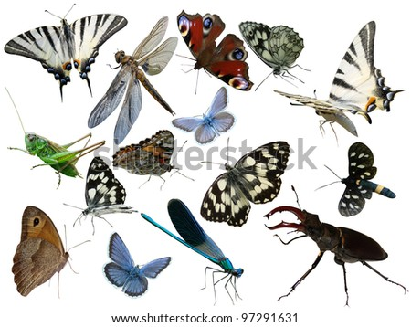 Butterflies of a dragonfly bugs insects it is isolated - stock photo