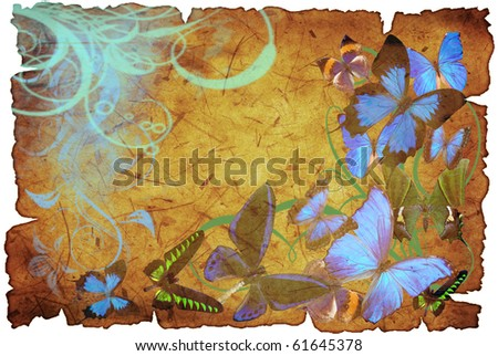 butterflies on old vellum with spot and rift - stock photo