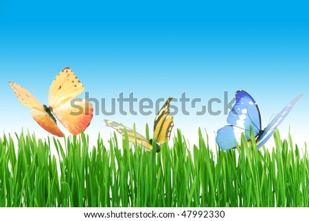 Butterflies on the meadow with clear sky
