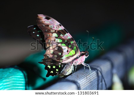 butterfly; - stock photo