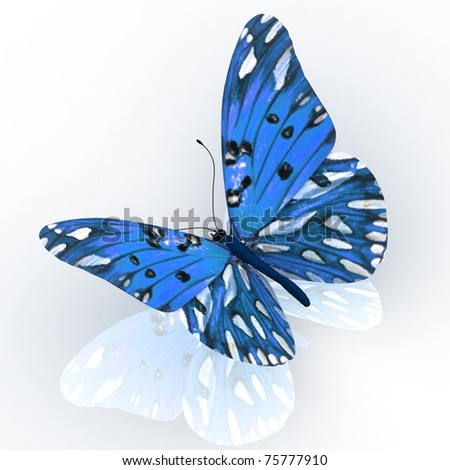 Butterfly. - stock photo