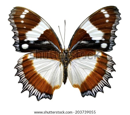 Butterfly Africa Hypolimnas dexithea (Clipping path) - stock photo