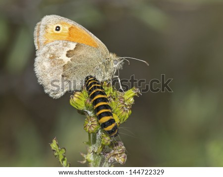 butterfly and caterpillar - stock photo
