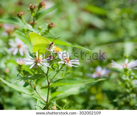 Butterfly and flower in summer nature - stock photo