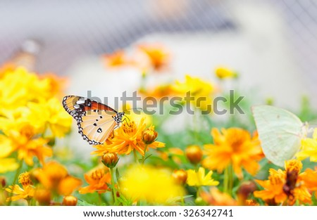 butterfly and flowers in the garden - stock photo