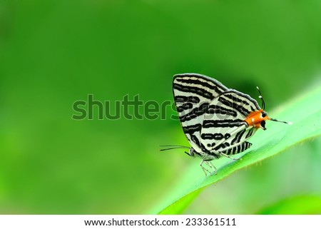 Butterfly and green leaves (Club Silverline)