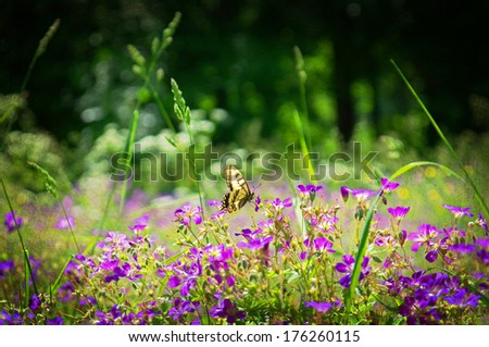 Butterfly and midsummer flower, textured conceptual image - stock photo