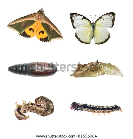 butterfly and moth life cycle isolated on white - stock photo