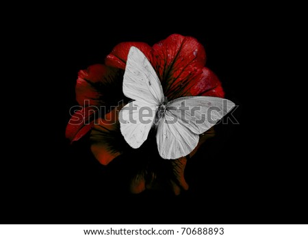 butterfly and red blossom isolated on black - stock photo