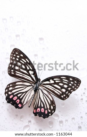 Butterfly and water drops - stock photo