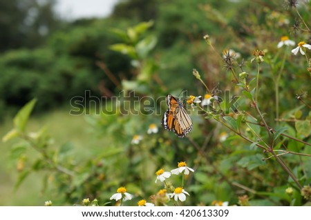 Butterfly and wild grass - stock photo