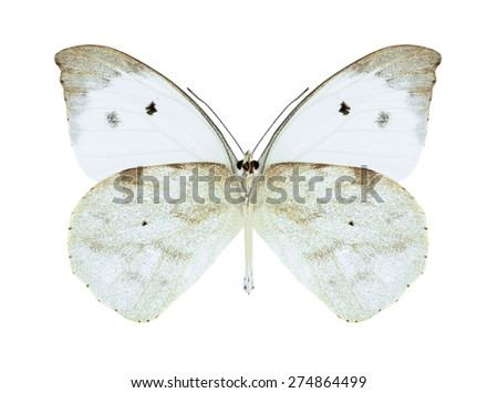 Butterfly Appias lalassis indroides (male) (underside) on a white background - stock photo