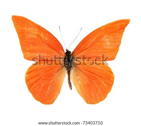 Butterfly Appias zarinda zarinda perspicua isolated on white - stock photo