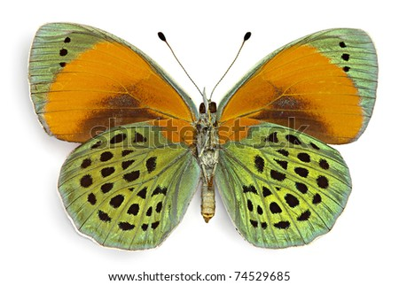 Butterfly Asterope sapphira (Nymphalidae), male from Brazil, ventral side - stock photo
